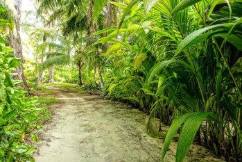 Denis Island 19 seychelles denis island21
