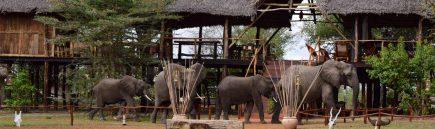 Selous Impala Camp 7 tanzanie du sud selous impala camp5