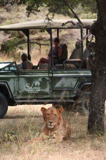 Siwandu Camp 11 tanzanie du sud siwandu safari camp11