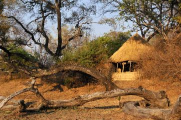 Chikoko & Crocodile Camp 2