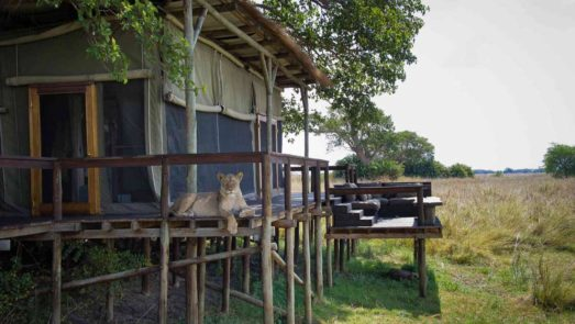 Shumba Camp 10 zambie shumba camp10