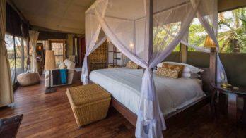 Shumba Camp 11 zambie shumba camp11