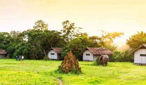 Congo 3 congo mboko camp0