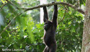 Congo 1 congo parc national odzala kokoua 01