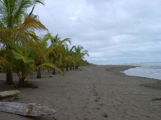 Turtle Beach Lodge 13