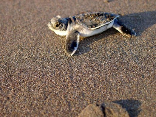 Turtle Beach Lodge 14