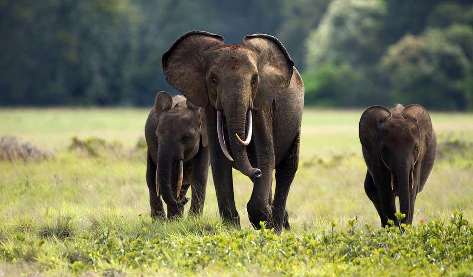 Parc National de Loango 6