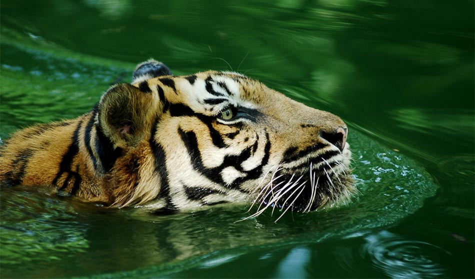 Inde 1 inde nature sauvage1