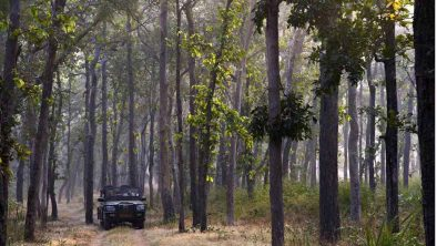 Samode Safari Lodge 15 inde samode safari lodge16