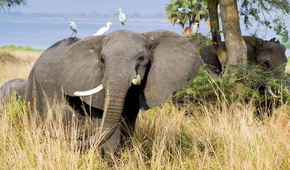 Au Pays des Grands Lacs avec Murchison Falls 12 ouganda au pays des grands lacs murchison falls1
