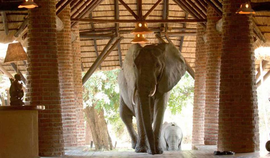Lodges South Luangwa 3