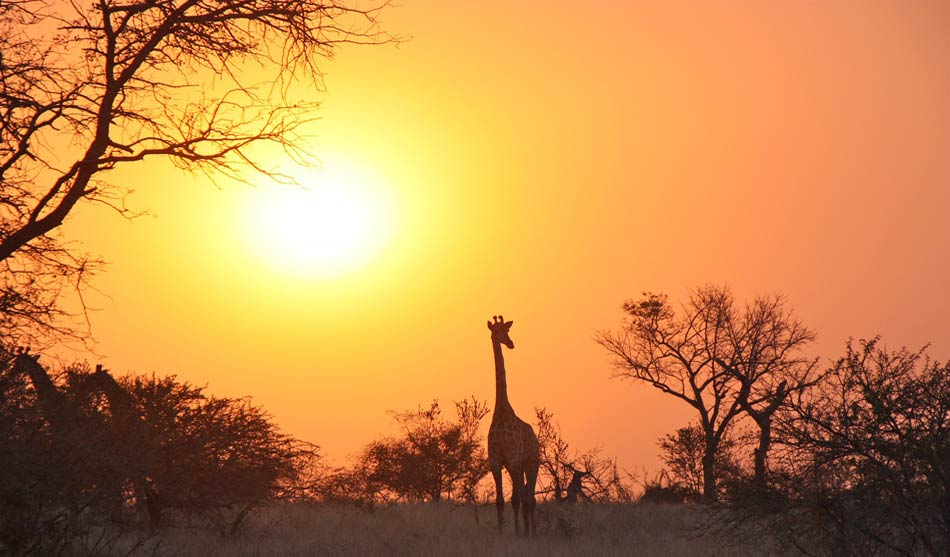 Zambie 1 zambie safari 4x4 a pieds south luangwa1