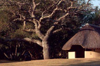 Bonamanzi Lalapanzi Camp 6 afrique du sud bonomanzi lalapanzi camp5