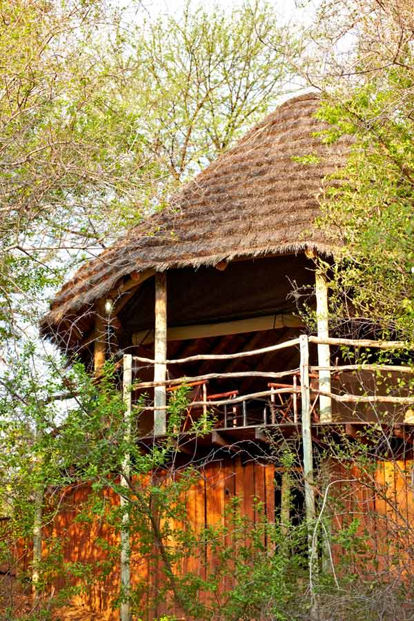 Jaci's Safari Lodge 10 afrique du sud jacis safari lodge5