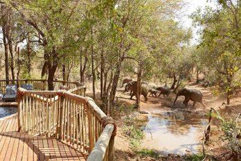 Jaci's Safari Lodge 8 afrique du sud jacis safari lodge8