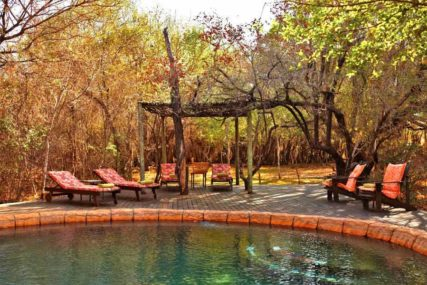 Jaci's Tree Lodge 6 afrique du sud jacis tree lodge6