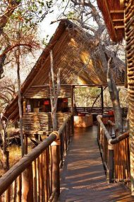 Jaci's Tree Lodge 7 afrique du sud jacis tree lodge9