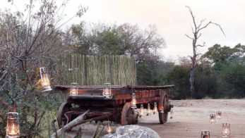 Londolozi Pioneer Camp 3 afrique du sud londolozi pioneer camp3