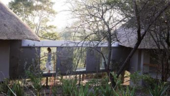 Londolozi Pioneer Camp 8