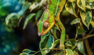 Madagascar 1 madagascar andasibe pangalanes saintemarie1