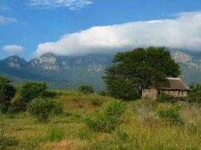 Moholoholo Forest Camp 7 afrique du sud moholoholo forest camp4