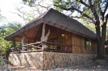 Moholoholo Forest Camp 5