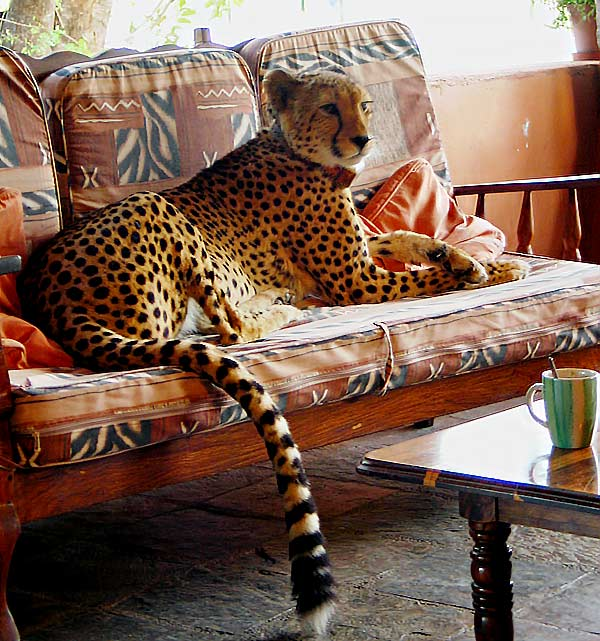 Tshukudu Game Lodge 19 afrique du sud tshukudu game lodge22