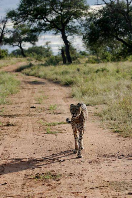 Tshukudu Game Lodge 20 afrique du sud tshukudu game lodge23