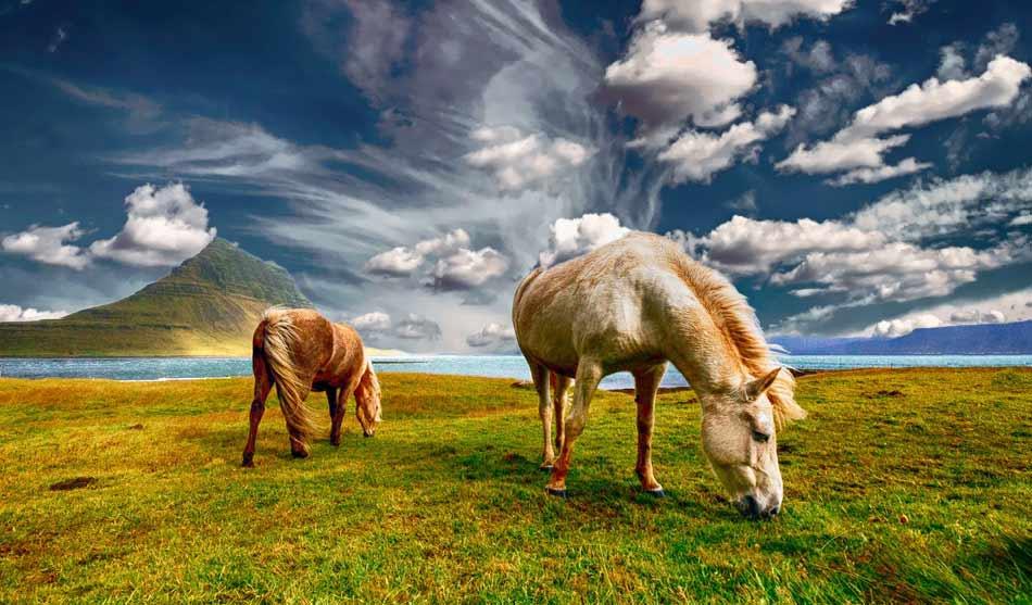 Islande 3 islande decouvertes au printemps1