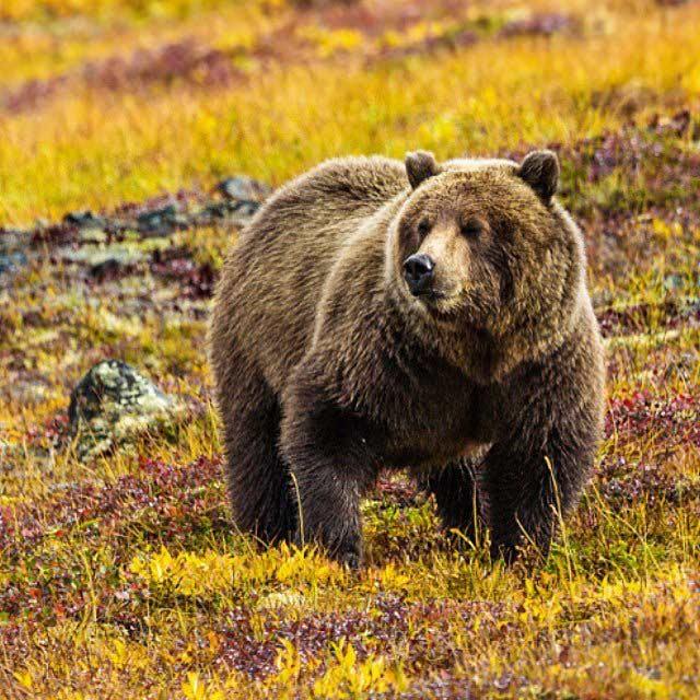 L'essentiel de l'Alaska 13 Voyage Photos Yukon Alaska Automne15