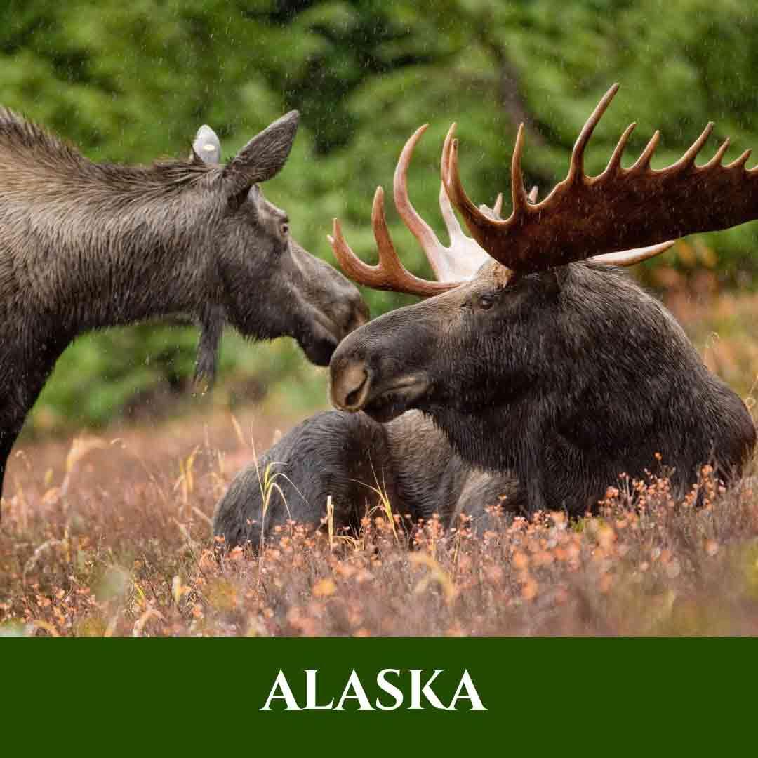 Alaska 3 Vignette Alaska