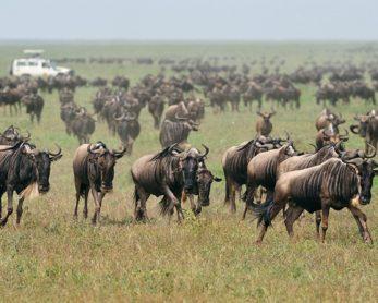 Ndutu Safari Lodge 7 tanzanie ndutu safari lodge21