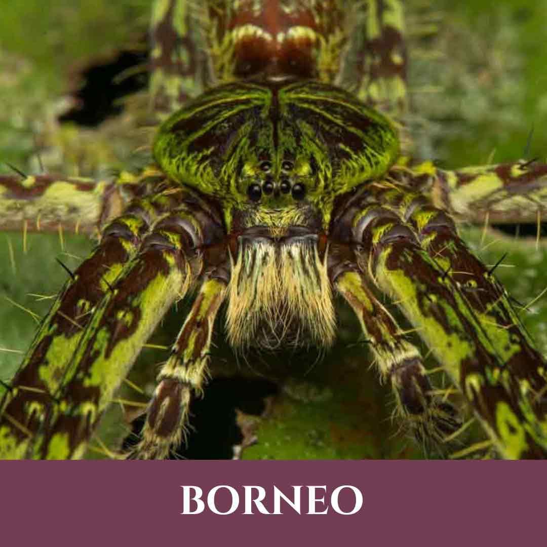 Bornéo 5 Vignette Bornéo