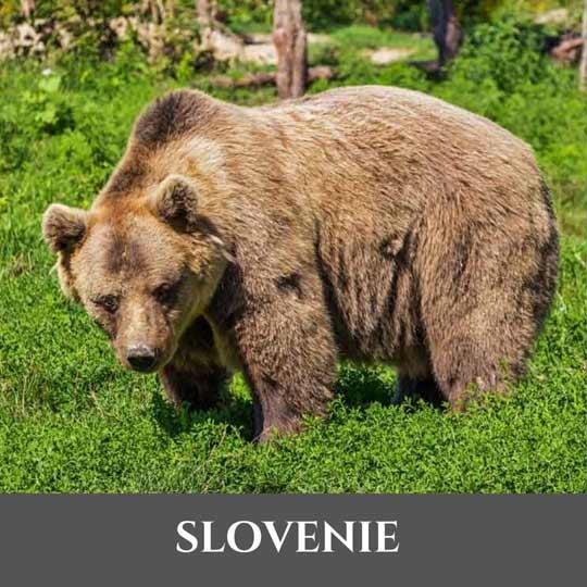 Slovénie 8 Vignette Slovénie