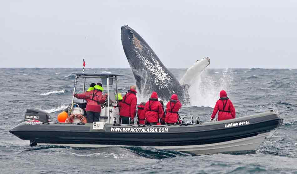 Le Monde des Baleines avec Yves Paccalet 2 acores le monde des baleines1