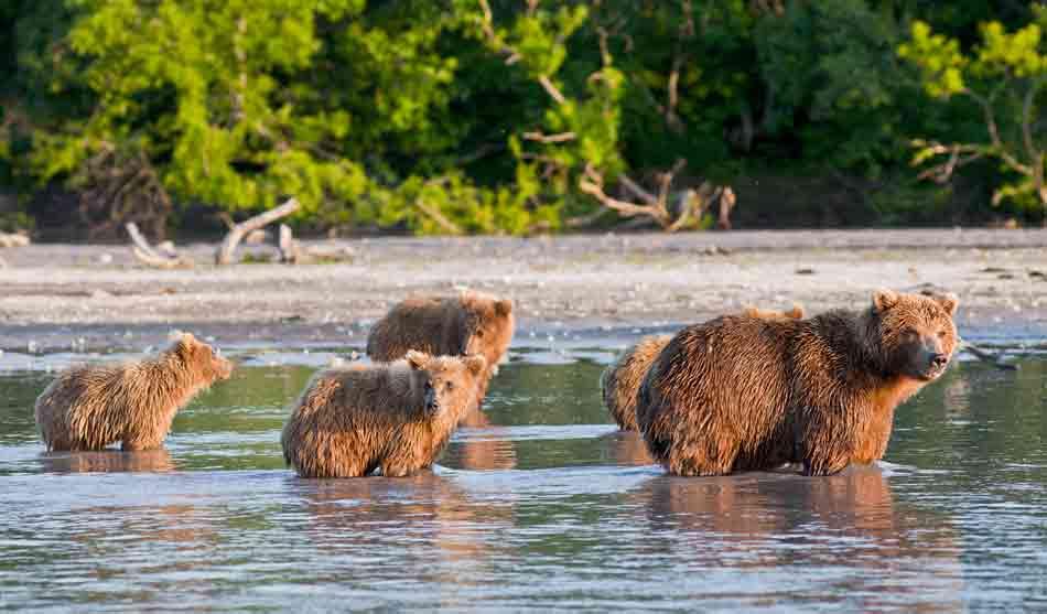 Russie 4 russie ours lac kourile croisiere pacifique1