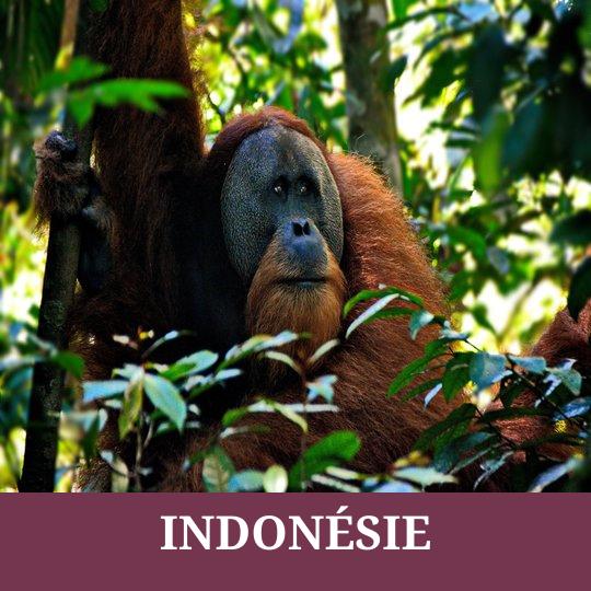 Indonésie 6 INDONÉSIE 1