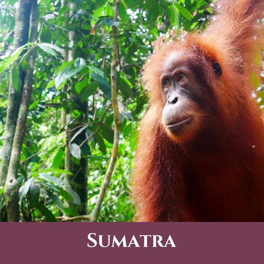 Sumatra 6 Vignette Sumatra