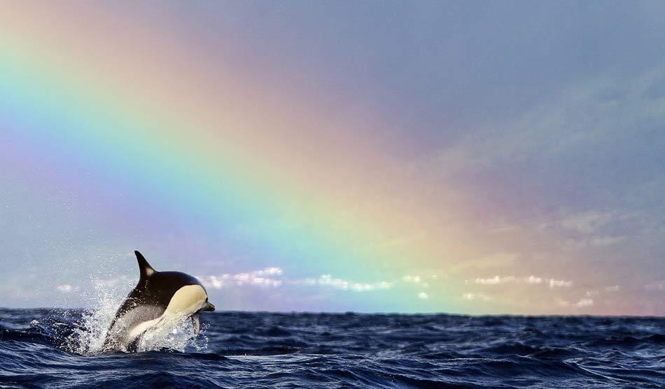 Les Açores 2 acores dauphins baleines famille1