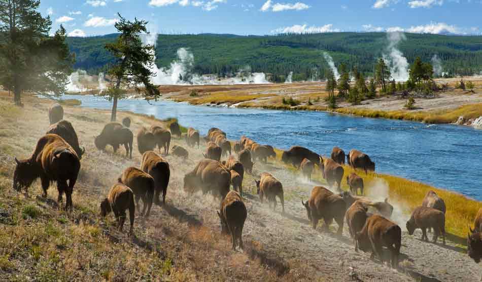 Etats-Unis 2 etats unis coeur volcanique peripherie sauvage yellowstone1