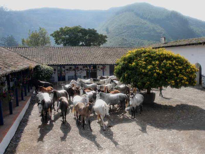 Hacienda Zuleta 13 equateur hacienda zuleta9