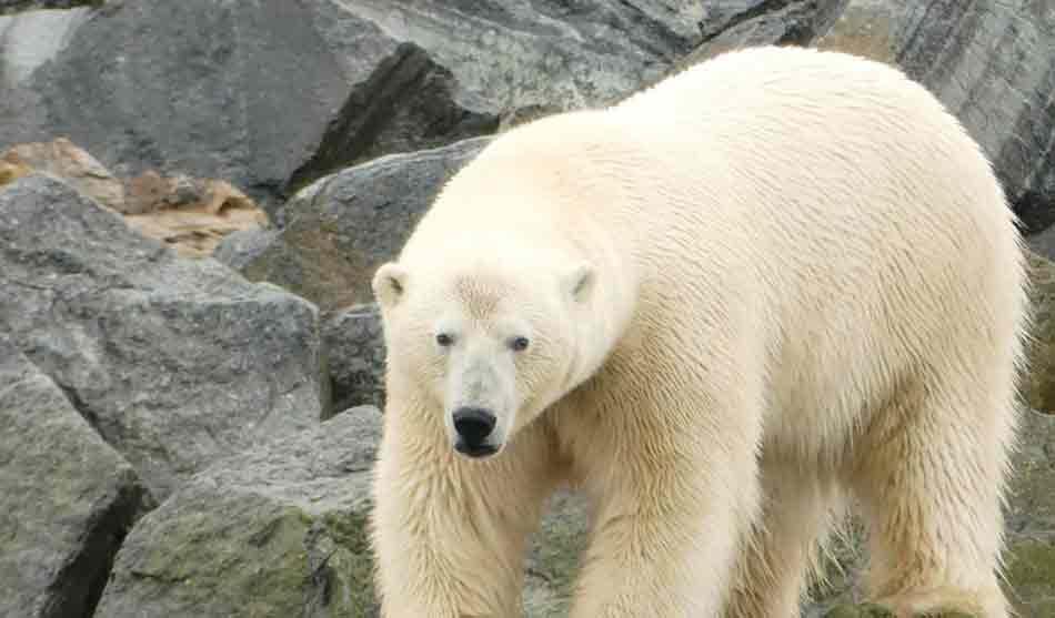 Expéditions Polaires 4 expeditions polaires du groenland a saint pierre et miquelon1 1