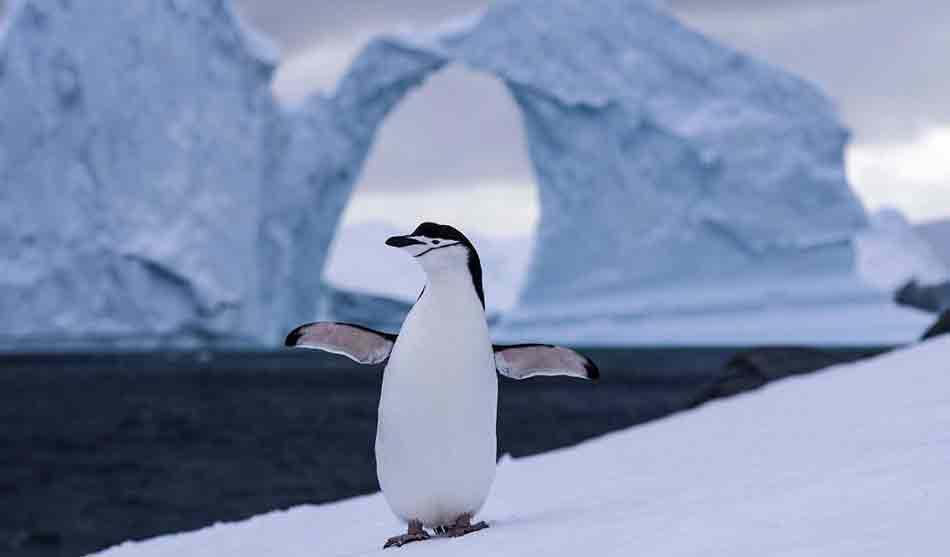 Expéditions Polaires 5 expeditions polaires la grande croisiere antarctique georgie du sud1