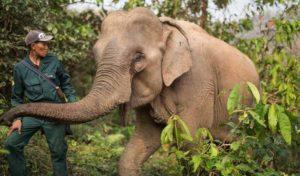 Laos 1 laos elephant conservation center2 1
