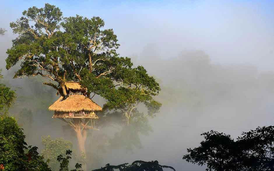 Laos Séjour Canopée et Gibbons