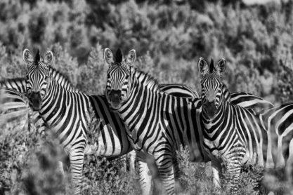 Mahangu Safari Lodge 6 namibie mahangu safari lodge9