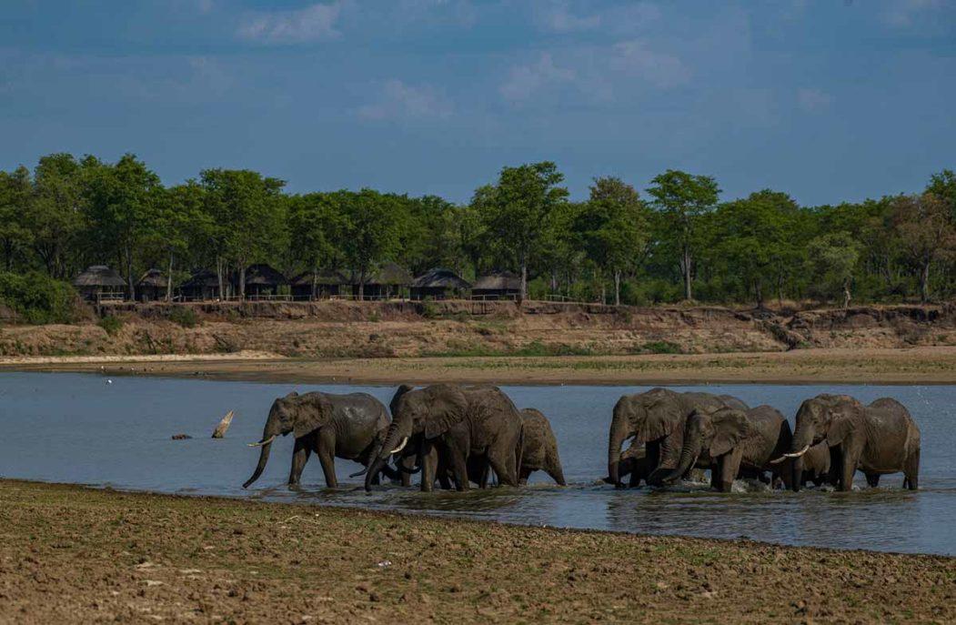 Wildlife Camp 12 zambie wildlife camp11