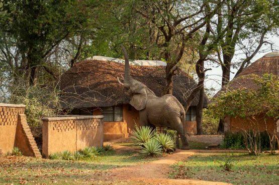 Wildlife Camp 8 zambie wildlife camp3