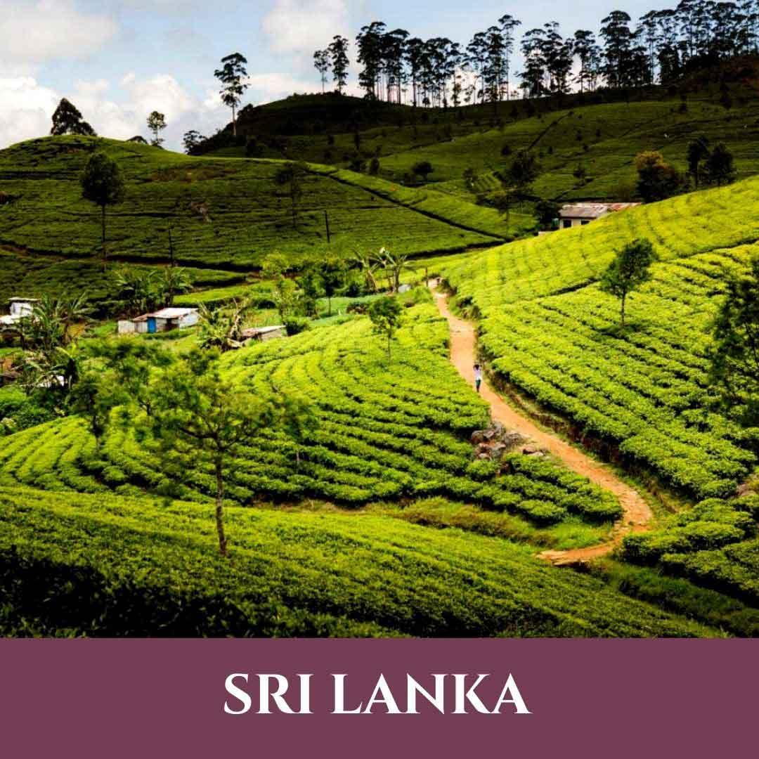 Sri Lanka 8 Vignette Sri Lanka