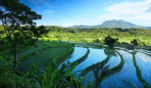 Indonésie 5 indonésie bali indah1